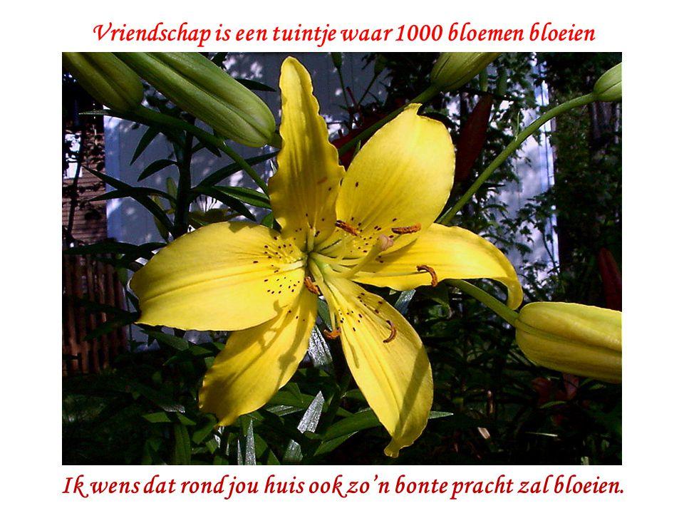Vriendschap is een tuintje waar 1000 bloemen bloeien Ik wens dat rond jou huis ook zo'n bonte pracht zal bloeien.