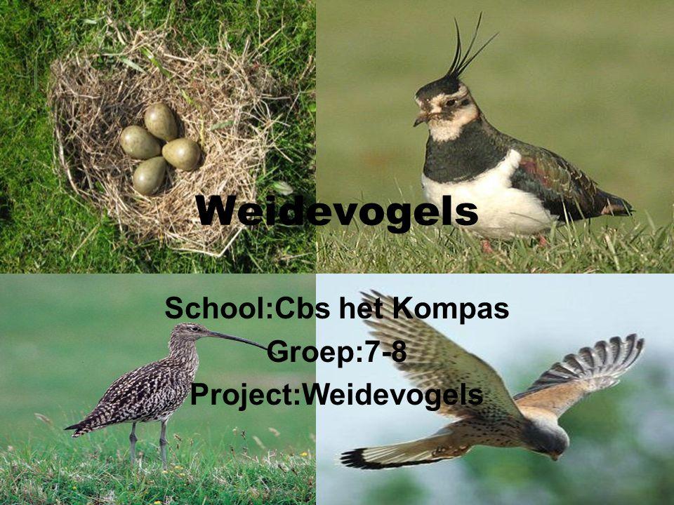 Weidevogels School:Cbs het Kompas Groep:7-8 Project:Weidevogels