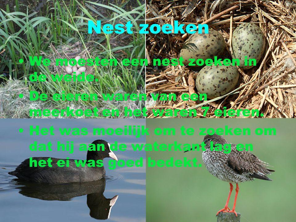 Nest zoeken We moesten een nest zoeken in de weide. De eieren waren van een meerkoet en het waren 7 eieren. Het was moeilijk om te zoeken om dat hij a