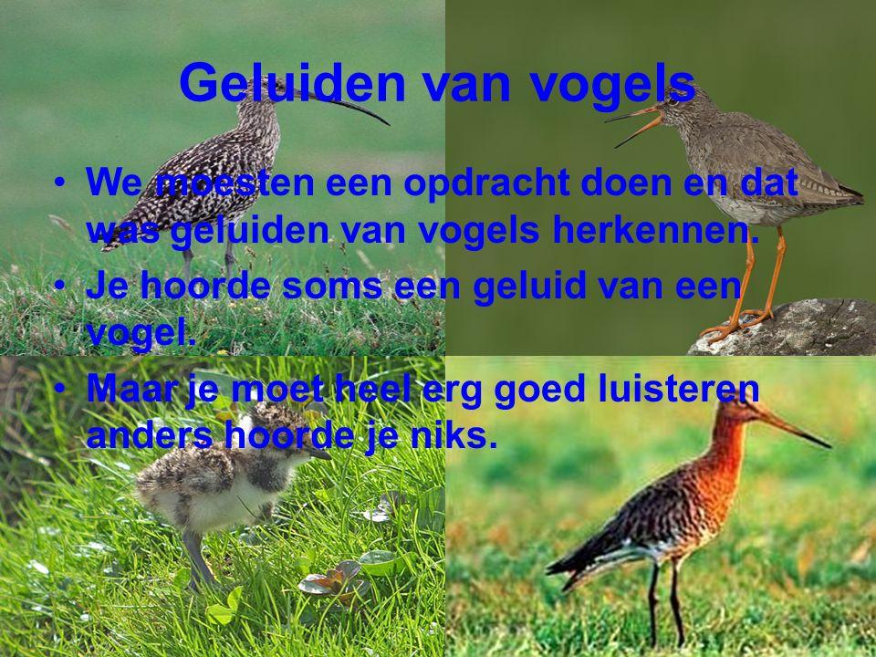 Vogels Bekijken We moesten ook vogels bekijken.
