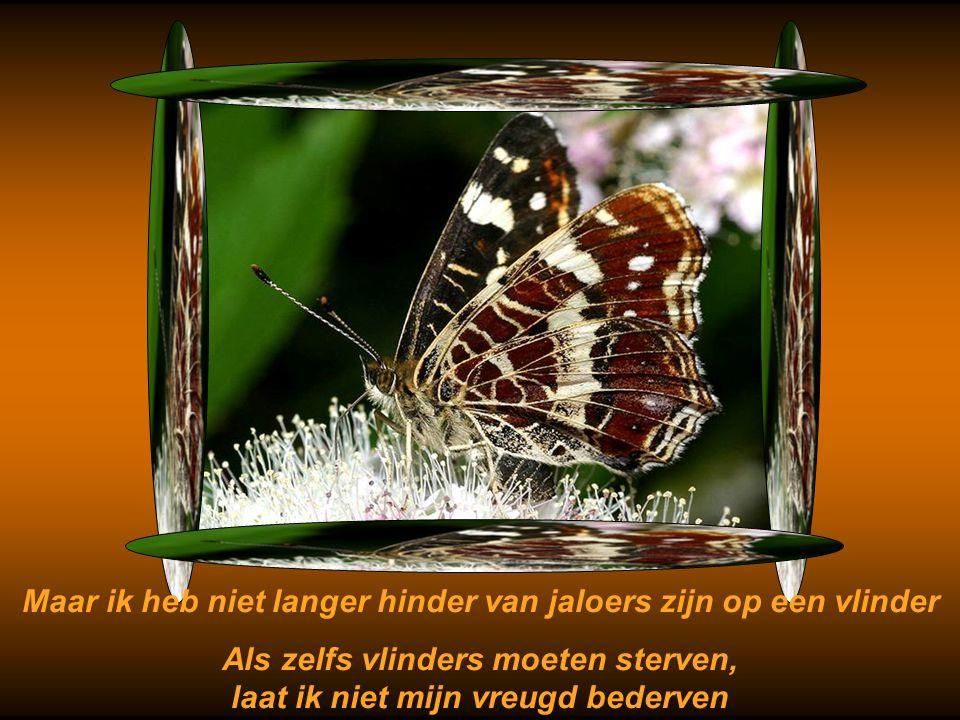 Om te leven dacht ik: je zou een vlinder moeten zijn Om te vliegen heel ver weg van alle leven, alle pijn