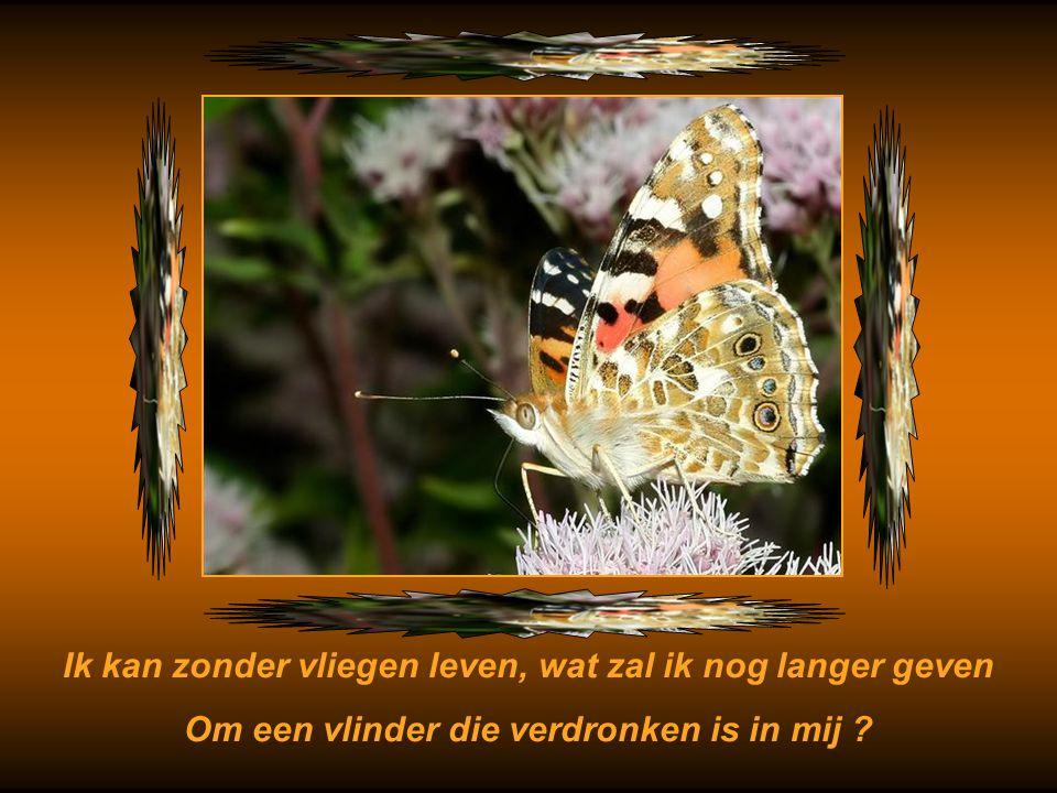 Maar ik heb niet langer hinder van jaloers zijn op een vlinder Als zelfs vlinders moeten sterven, laat ik niet mijn vreugd bederven