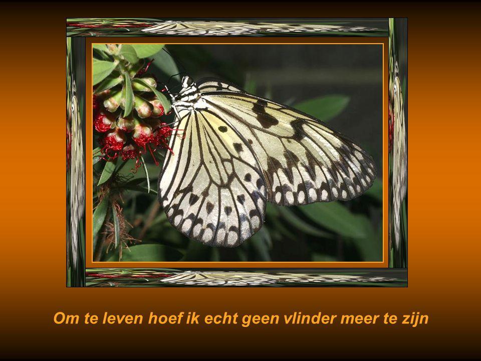 Ik kan zonder vliegen leven, wat zal ik nog langer geven Om een vlinder die verdronken is in mij ?