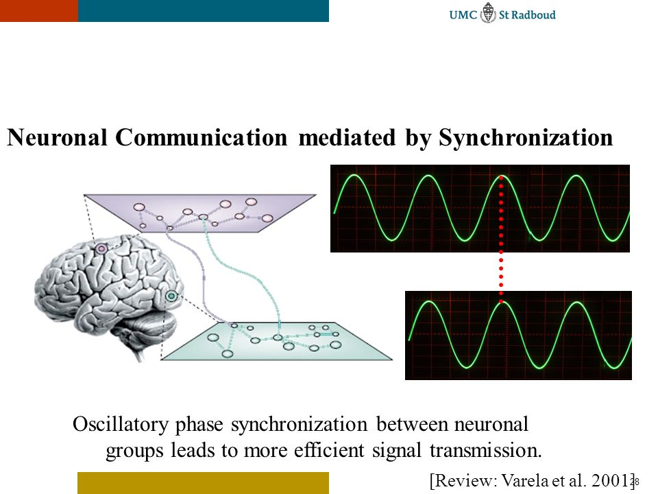28 Neuronal Communication mediated by Synchronization Oscillatory phase synchronization between neuronal groups leads to more efficient signal transmi