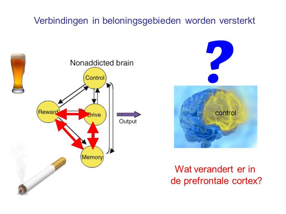 Verbindingen in beloningsgebieden worden versterkt Wat verandert er in de prefrontale cortex? control