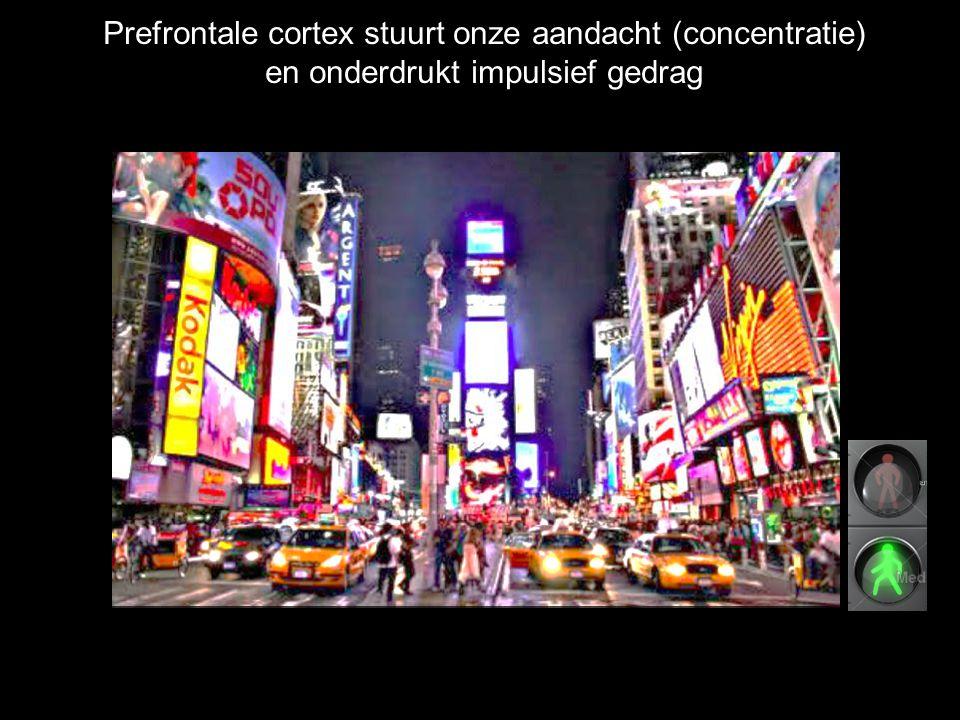 Prefrontale cortex stuurt onze aandacht (concentratie) en onderdrukt impulsief gedrag