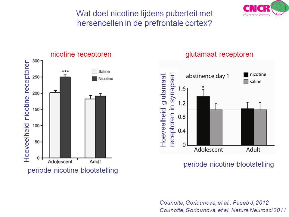 Wat doet nicotine tijdens puberteit met hersencellen in de prefrontale cortex? Counotte, Goriounova, et al., Faseb J, 2012 periode nicotine blootstell