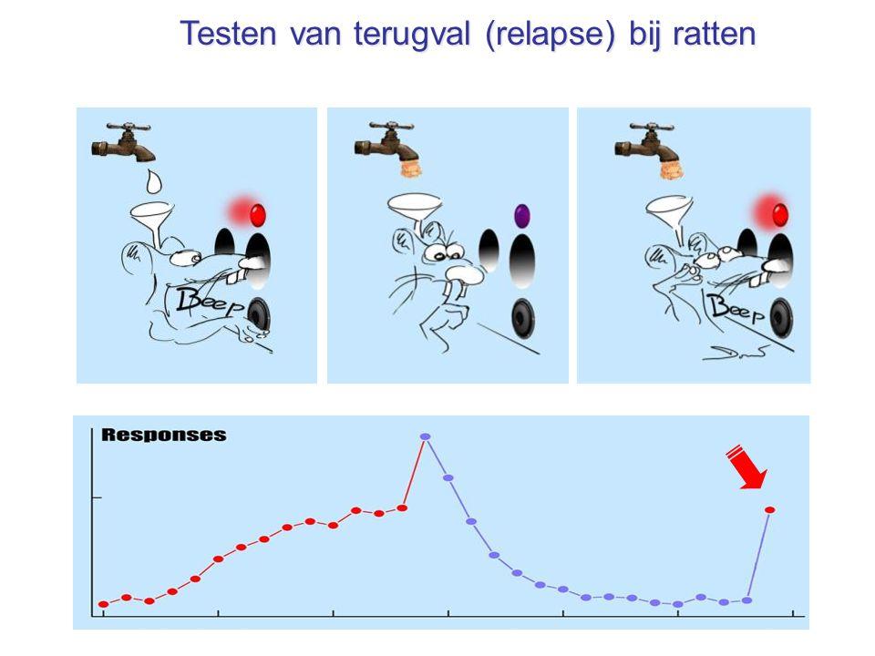 Testen van terugval (relapse) bij ratten