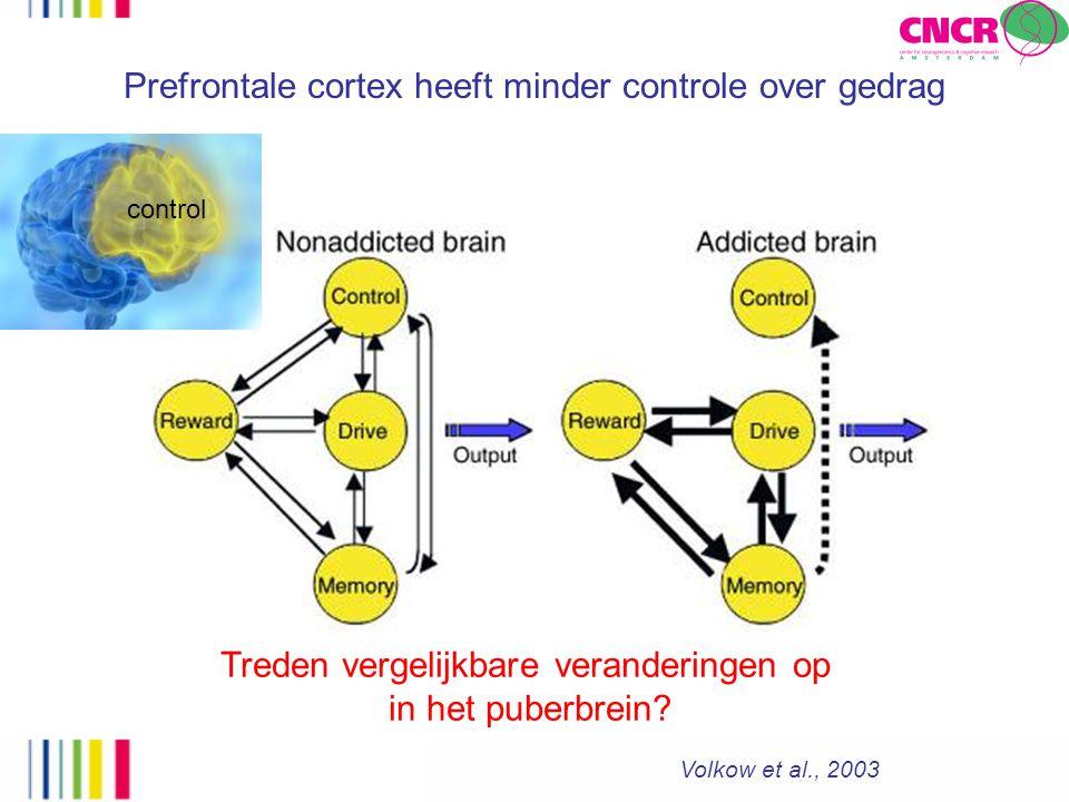Prefrontale cortex heeft minder controle over gedrag Volkow et al., 2003 control Treden vergelijkbare veranderingen op in het puberbrein?