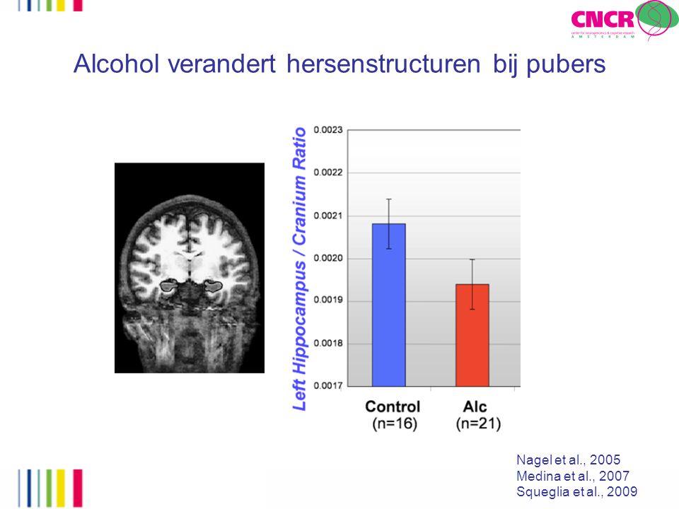 De prefrontale cortex van adolescente zware drinkers is kleiner Squeglia et al., 2009