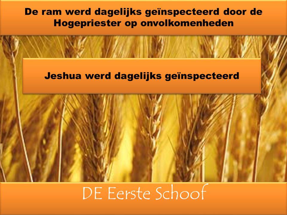 DE Eerste Schoof De ram werd dagelijks geïnspecteerd door de Hogepriester op onvolkomenheden Jeshua werd dagelijks geïnspecteerd