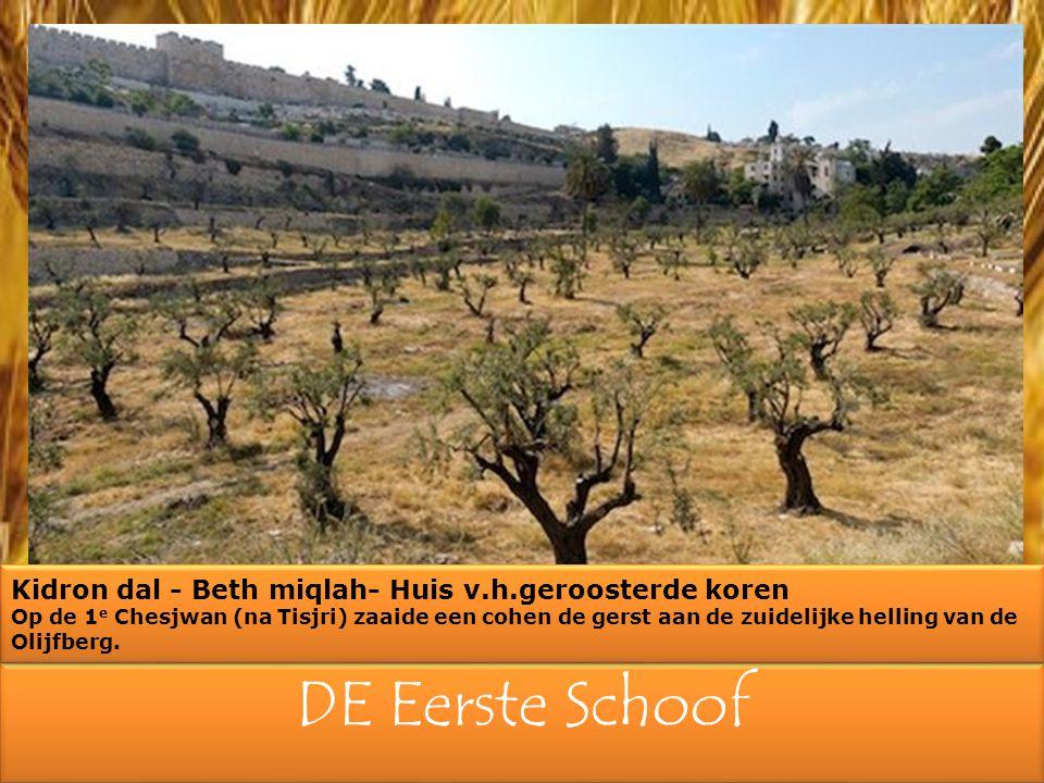 DE Eerste Schoof Kidron dal - Beth miqlah- Huis v.h.geroosterde koren Op de 1 e Chesjwan (na Tisjri) zaaide een cohen de gerst aan de zuidelijke helling van de Olijfberg.