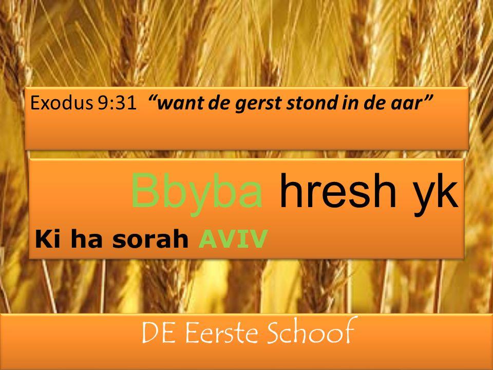 """DE Eerste Schoof Exodus 9:31 """"want de gerst stond in de aar"""" Bbyba hresh yk Ki ha sorah AVIV Bbyba hresh yk Ki ha sorah AVIV"""