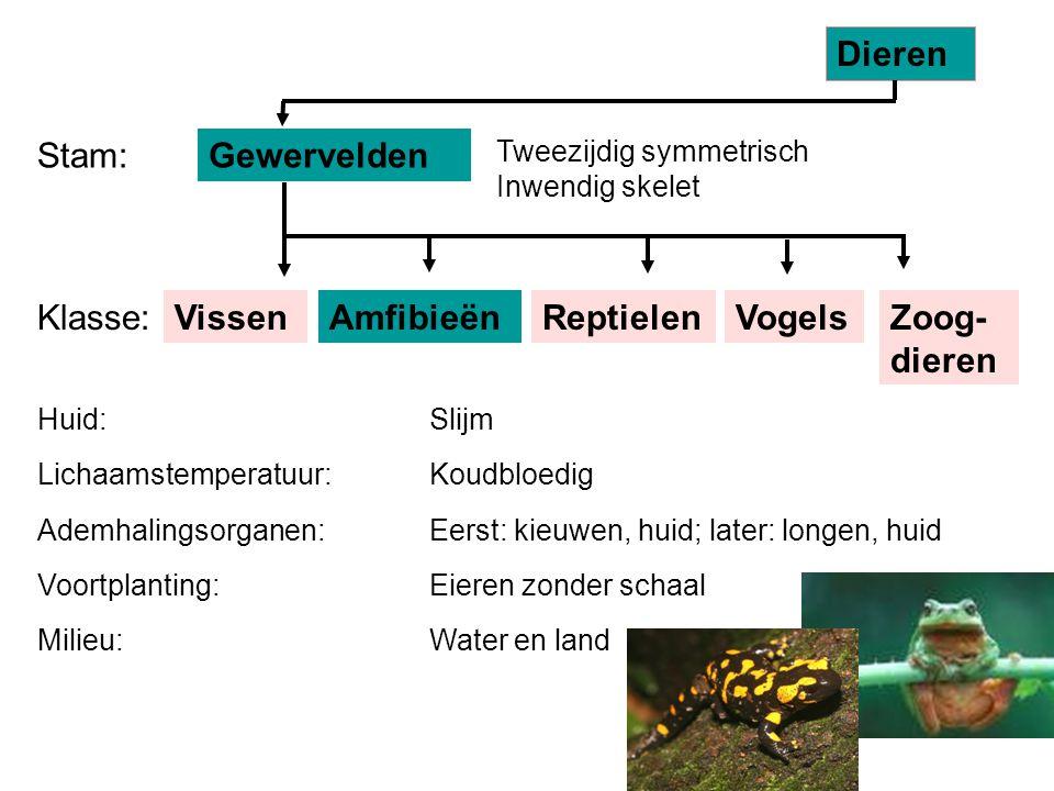 VissenReptielenAmfibieënVogels Tweezijdig symmetrisch Inwendig skelet Gewervelden Dieren Stam: Klasse:Zoog- dieren Huid: Lichaamstemperatuur: Ademhali