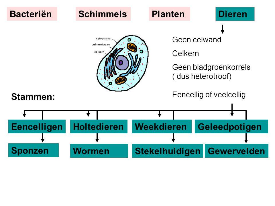 Sponzen Gewervelden Geen celwand Celkern Geen bladgroenkorrels ( dus heterotroof) Eencellig of veelcellig EencelligenWeekdieren BacteriënSchimmelsPlan