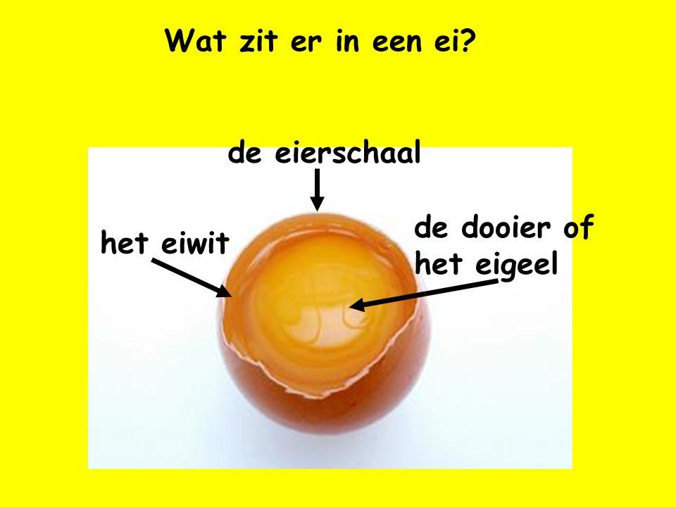 Wat zit er in een ei? het eiwit de dooier of het eigeel de eierschaal