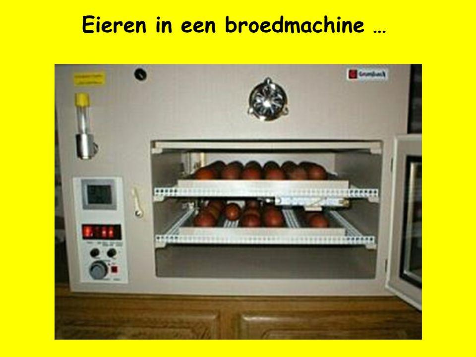 Eieren in een broedmachine …