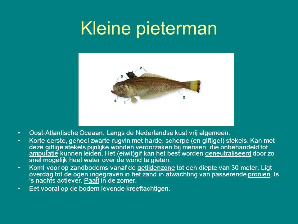Kleine pieterman Oost-Atlantische Oceaan. Langs de Nederlandse kust vrij algemeen. Korte eerste, geheel zwarte rugvin met harde, scherpe (en giftige!)
