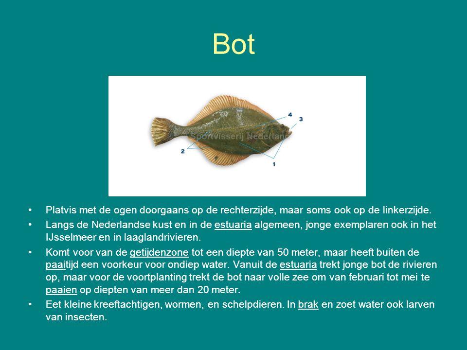 Bot Platvis met de ogen doorgaans op de rechterzijde, maar soms ook op de linkerzijde. Langs de Nederlandse kust en in de estuaria algemeen, jonge exe