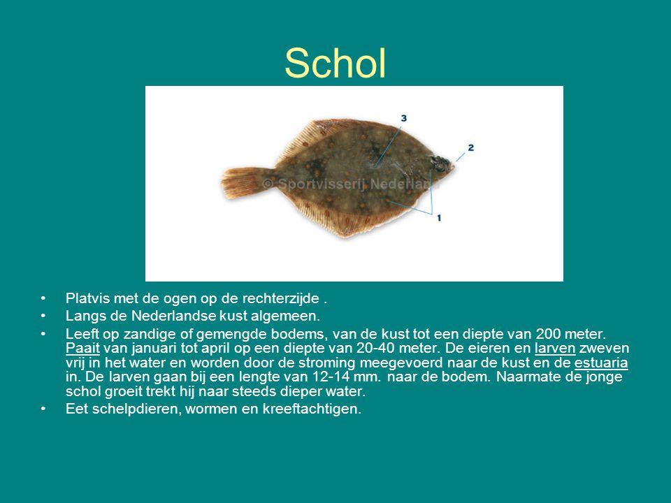 Schol Platvis met de ogen op de rechterzijde. Langs de Nederlandse kust algemeen. Leeft op zandige of gemengde bodems, van de kust tot een diepte van