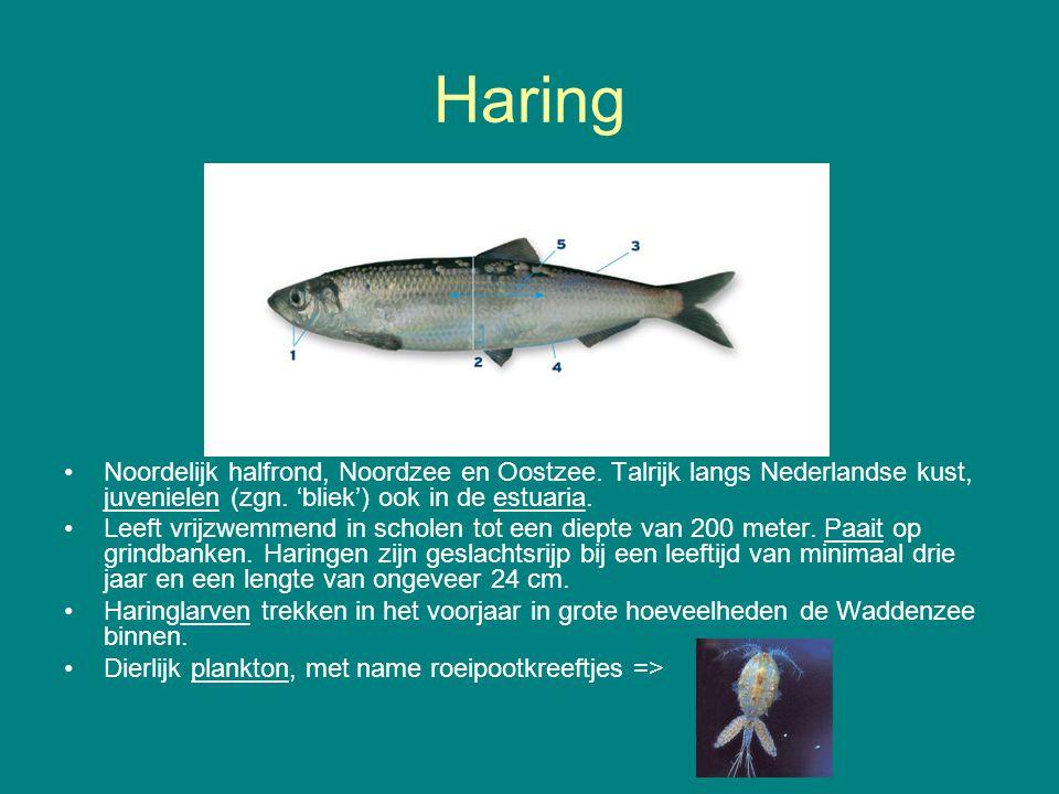 Haring Noordelijk halfrond, Noordzee en Oostzee. Talrijk langs Nederlandse kust, juvenielen (zgn. 'bliek') ook in de estuaria. Leeft vrijzwemmend in s