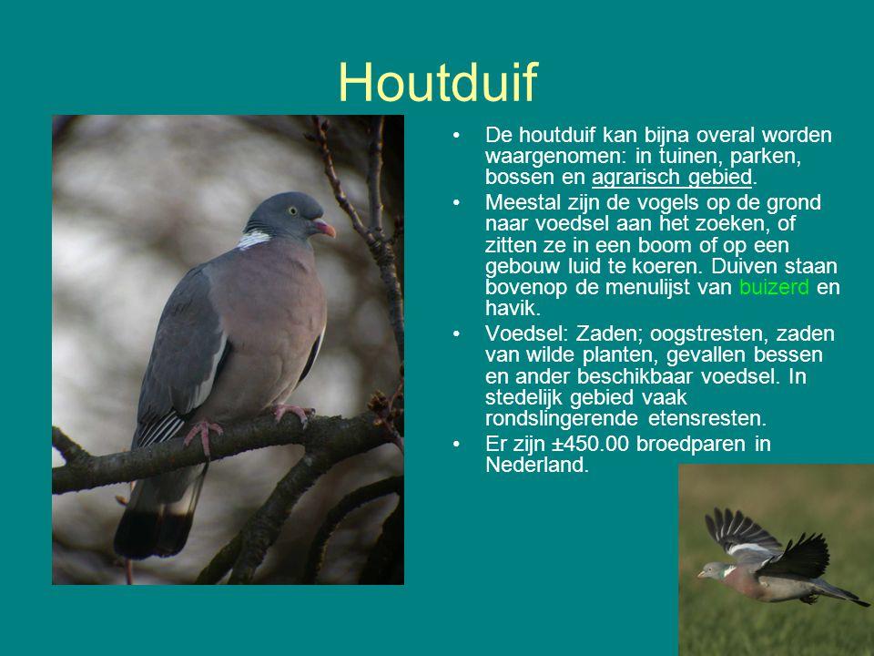 Houtduif De houtduif kan bijna overal worden waargenomen: in tuinen, parken, bossen en agrarisch gebied. Meestal zijn de vogels op de grond naar voeds