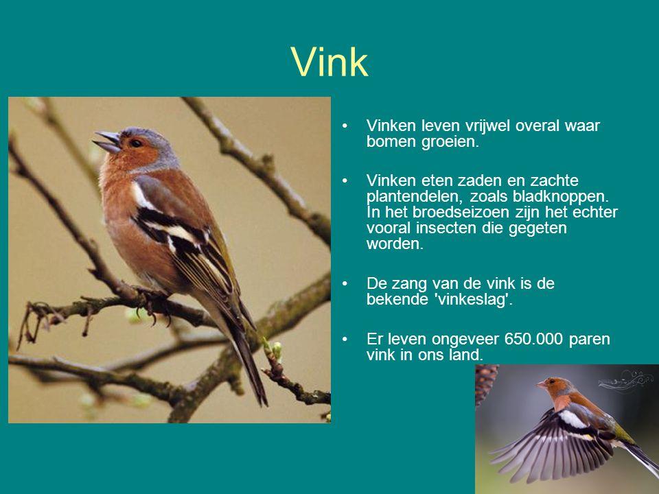 Vink Vinken leven vrijwel overal waar bomen groeien.