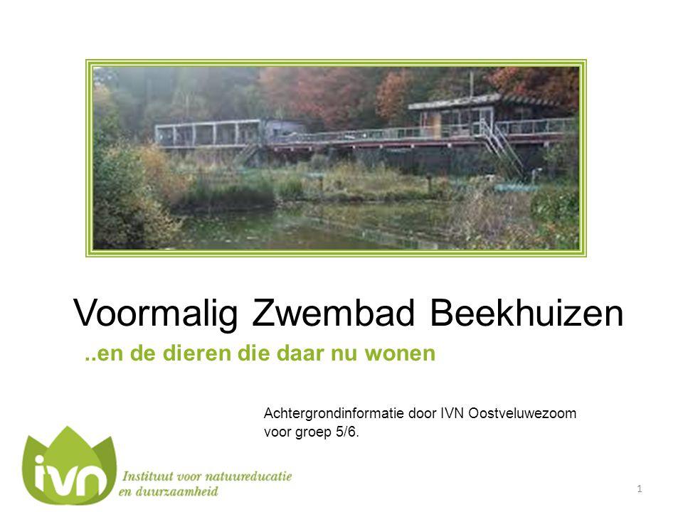 Voormalig Zwembad Beekhuizen..en de dieren die daar nu wonen Achtergrondinformatie door IVN Oostveluwezoom voor groep 5/6. 1