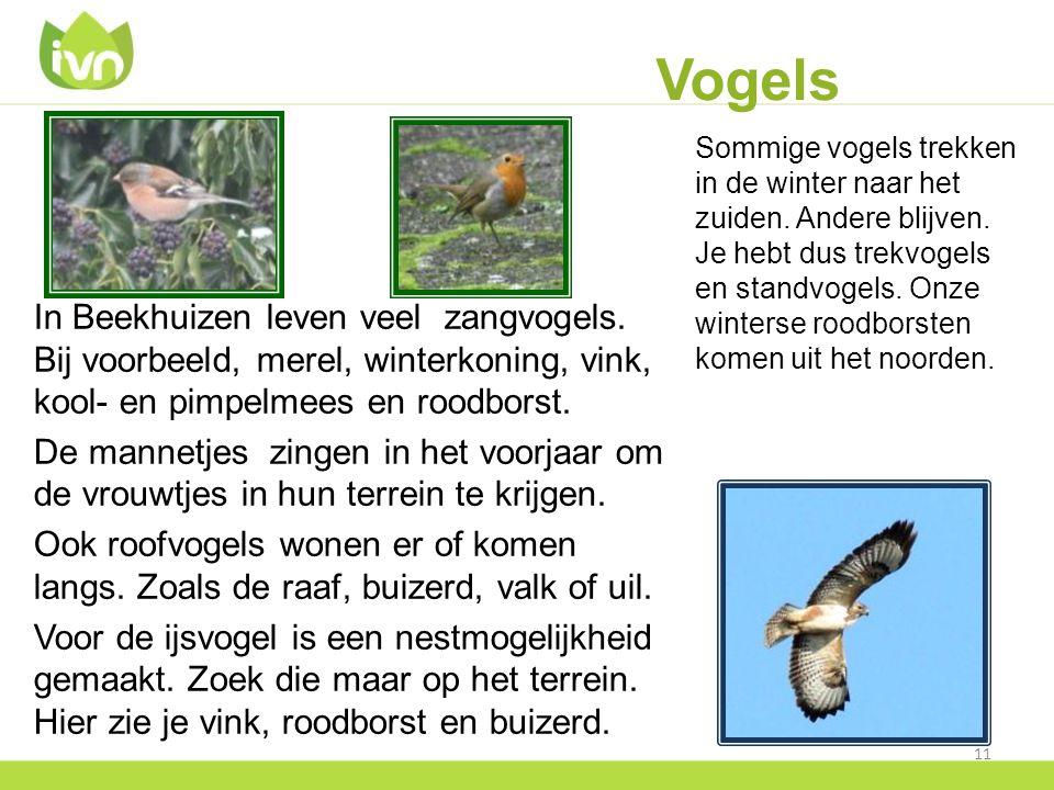 Vogels Sommige vogels trekken in de winter naar het zuiden.
