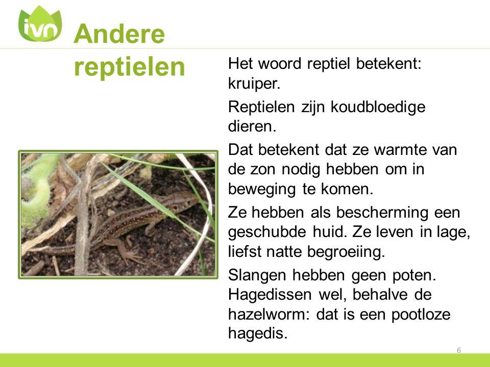 Andere reptielen Het woord reptiel betekent: kruiper. Reptielen zijn koudbloedige dieren. Dat betekent dat ze warmte van de zon nodig hebben om in bew