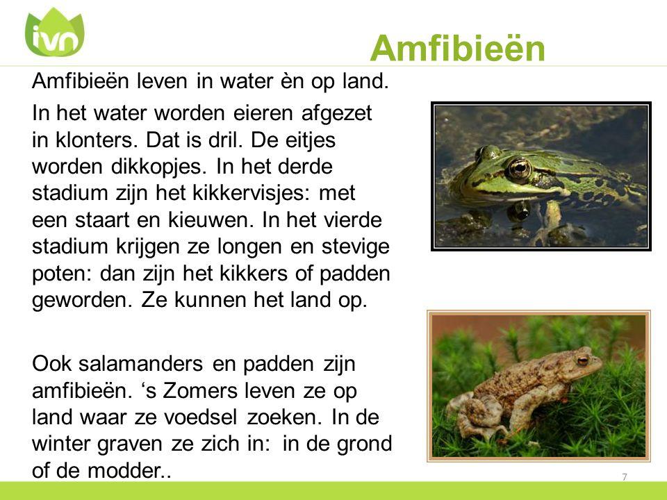 Amfibieën Amfibieën leven in water èn op land. In het water worden eieren afgezet in klonters. Dat is dril. De eitjes worden dikkopjes. In het derde s