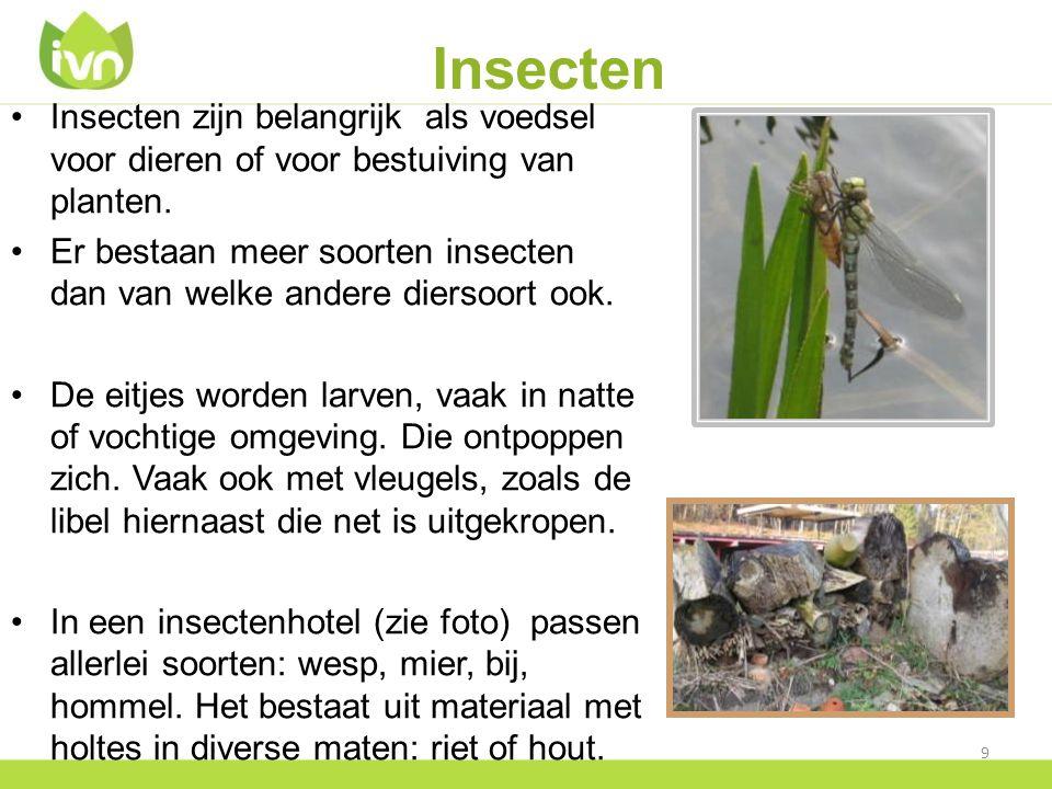 Insecten Insecten zijn belangrijk als voedsel voor dieren of voor bestuiving van planten. Er bestaan meer soorten insecten dan van welke andere dierso