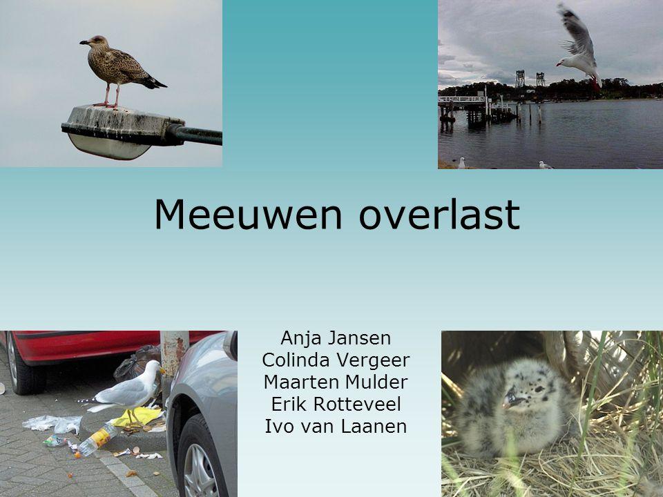 Meeuwen overlast Anja Jansen Colinda Vergeer Maarten Mulder Erik Rotteveel Ivo van Laanen