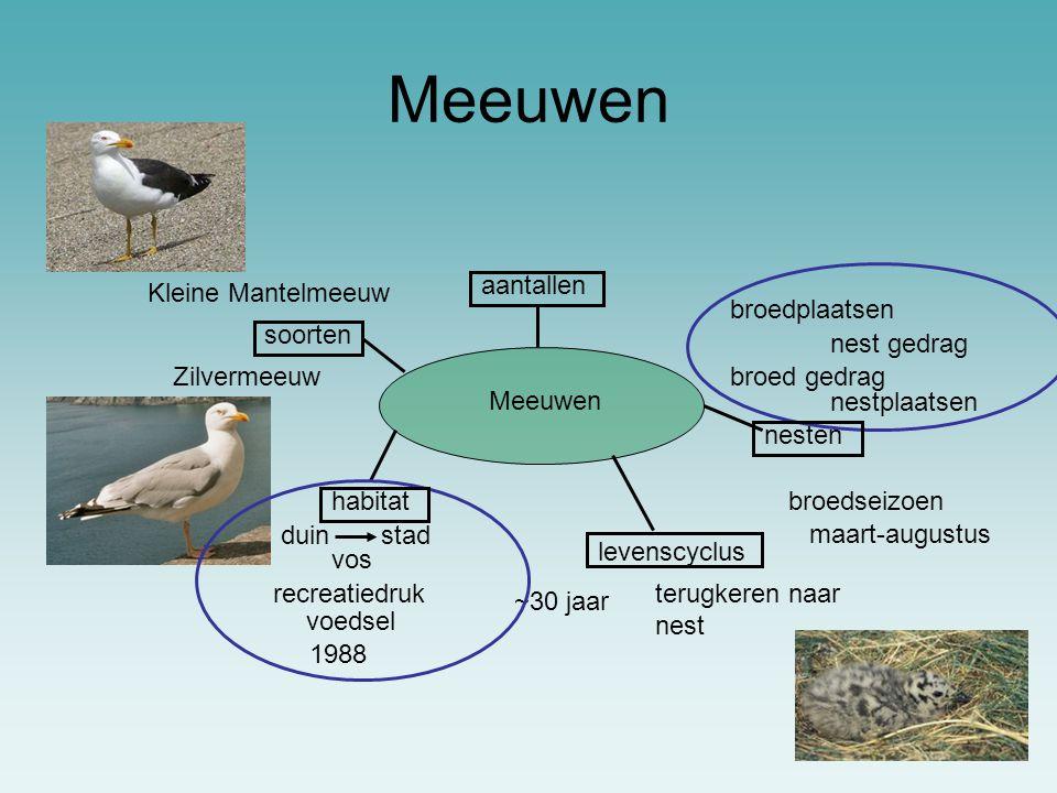 Meeuwen broedplaatsen nest gedrag broed gedrag maart-augustus broedseizoen nesten stadduin habitat nestplaatsen terugkeren naar nest ~30 jaar levenscy
