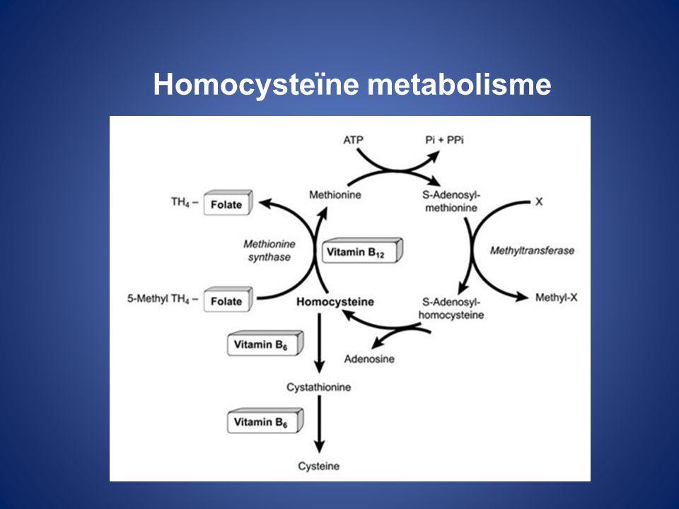 Homocysteïne metabolisme
