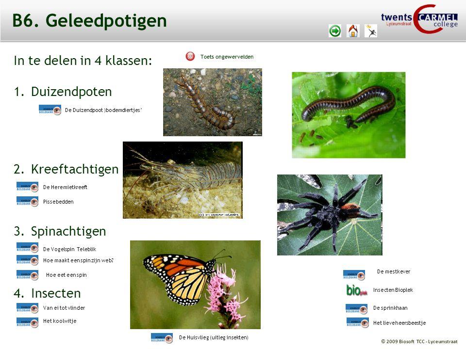 © 2009 Biosoft TCC - Lyceumstraat In te delen in 4 klassen: 1.Duizendpoten 2.Kreeftachtigen 3.Spinachtigen 4.Insecten B6. Geleedpotigen De Vogelspin T