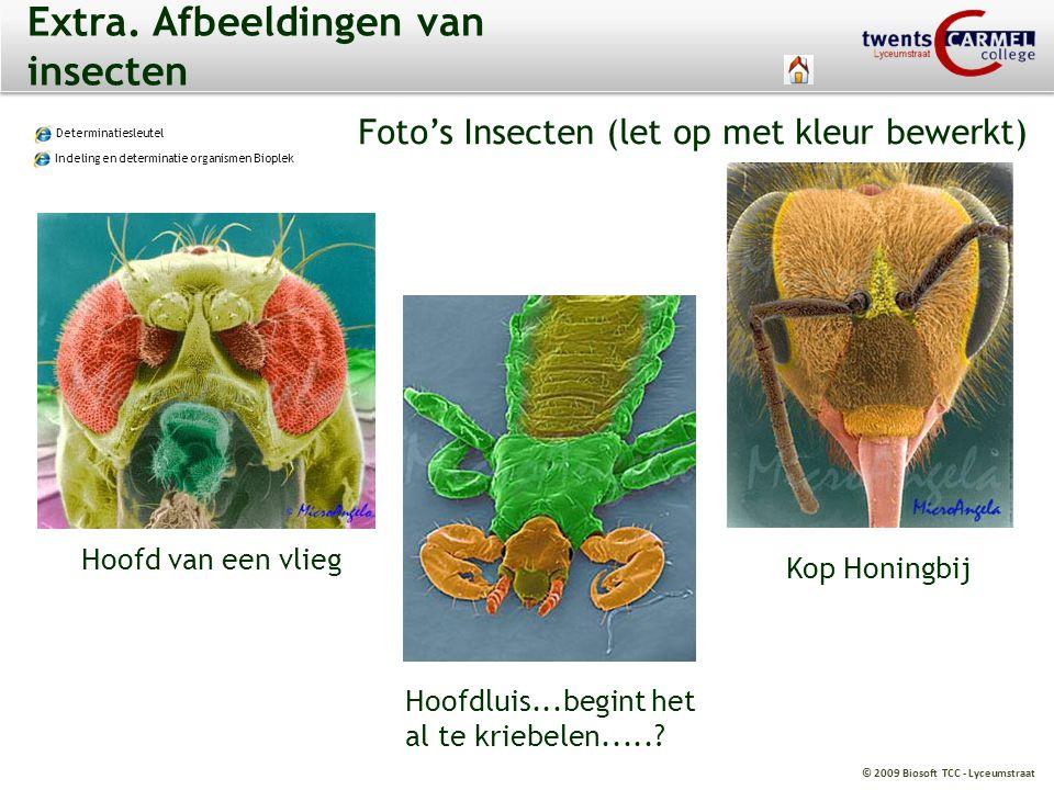 © 2009 Biosoft TCC - Lyceumstraat Extra. Afbeeldingen van insecten Determinatiesleutel Indeling en determinatie organismen Bioplek Foto's Insecten (le