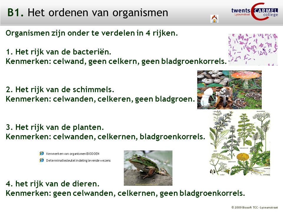 © 2009 Biosoft TCC - Lyceumstraat Organismen BacteriënSchimmelsPlantenDieren ja ja ja nee Rijken: nee nee ja nee nee ja ja ja 1 1 of 1 of 1 of veel veel veel Celwand: Celkern: Bladgroenkorrels: Aantal cellen: