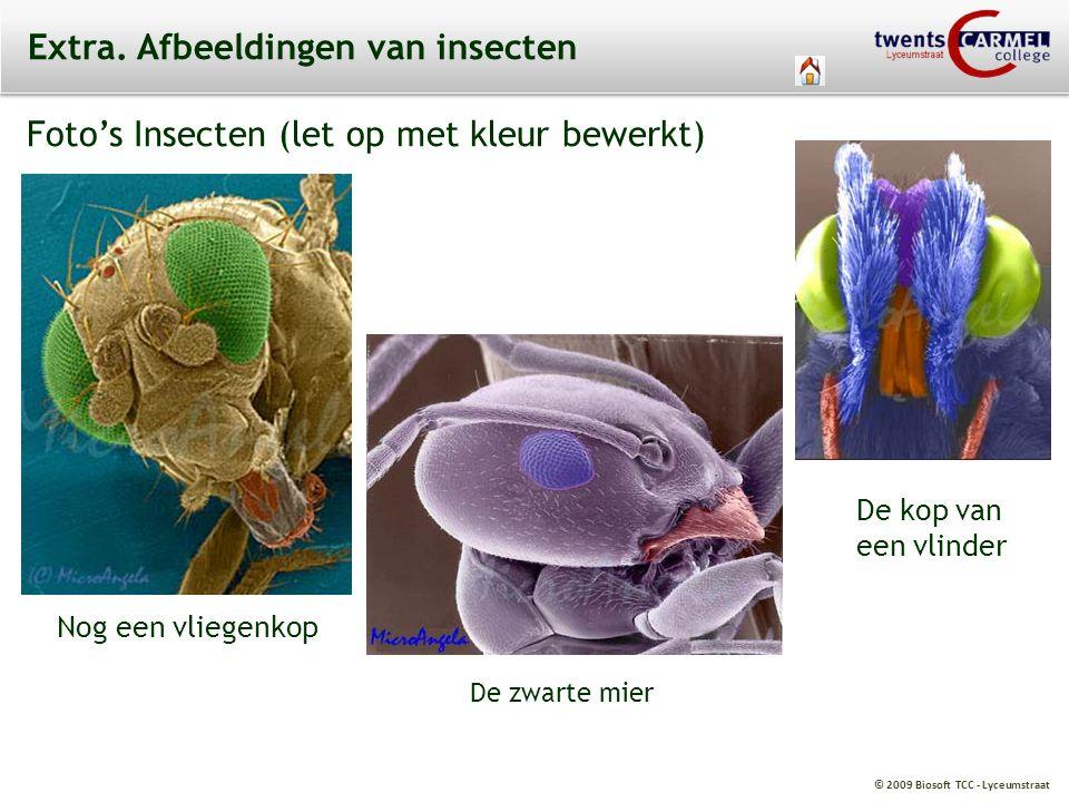 © 2009 Biosoft TCC - Lyceumstraat Extra. Afbeeldingen van insecten Foto's Insecten (let op met kleur bewerkt) Nog een vliegenkop De zwarte mier De kop