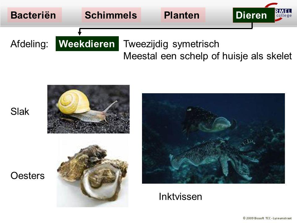 © 2009 Biosoft TCC - Lyceumstraat Slak Oesters Tweezijdig symetrisch Meestal een schelp of huisje als skelet Weekdieren BacteriënSchimmelsPlanten Dier
