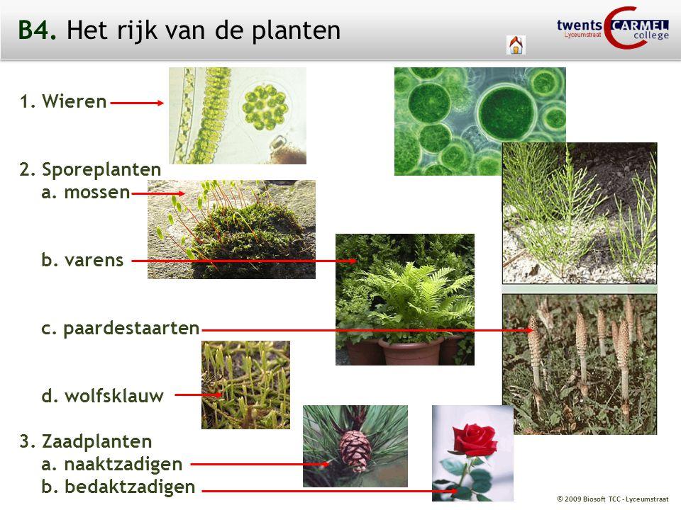© 2009 Biosoft TCC - Lyceumstraat 1. Wieren 2. Sporeplanten a. mossen b. varens c. paardestaarten d. wolfsklauw 3. Zaadplanten a. naaktzadigen b. beda