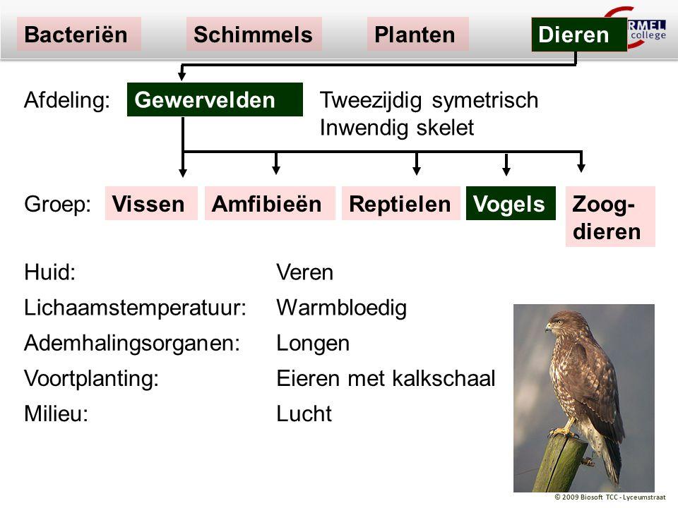 © 2009 Biosoft TCC - Lyceumstraat VissenReptielenAmfibieënVogels Tweezijdig symetrisch Inwendig skelet Gewervelden BacteriënSchimmelsPlanten Dieren Af