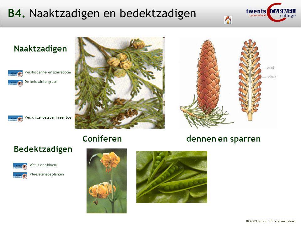 © 2009 Biosoft TCC - Lyceumstraat B4. Naaktzadigen en bedektzadigen Naaktzadigen Bedektzadigen Coniferen dennen en sparren Wat is een bloem Vleesetene