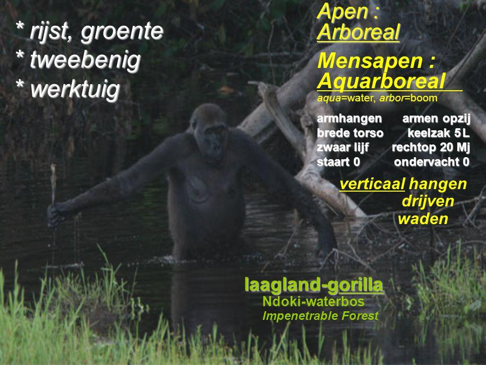 Evolutie van mensapen & mensen Mensapen : aquarboreal.