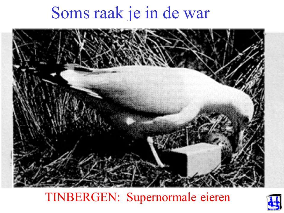 Soms raak je in de war TINBERGEN: Supernormale eieren