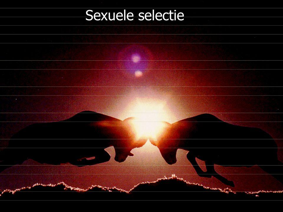 College keerpunten - UvA - (2004-2005) - S. Menken Sexuele selectie