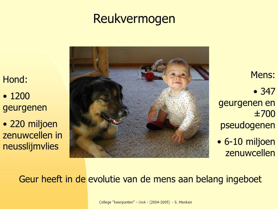 """College """"keerpunten"""" - UvA - (2004-2005) - S. Menken Mens: 347 geurgenen en ±700 pseudogenen 6-10 miljoen zenuwcellen Hond: 1200 geurgenen 220 miljoen"""