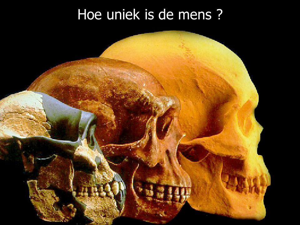 """College """"keerpunten"""" - UvA - (2004-2005) - S. Menken Hoe uniek is de mens ?"""