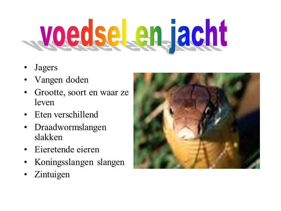 Jagers Vangen doden Grootte, soort en waar ze leven Eten verschillend Draadwormslangen slakken Eieretende eieren Koningsslangen slangen Zintuigen