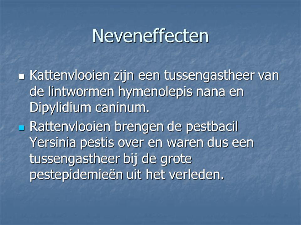 Neveneffecten Kattenvlooien zijn een tussengastheer van de lintwormen hymenolepis nana en Dipylidium caninum. Kattenvlooien zijn een tussengastheer va